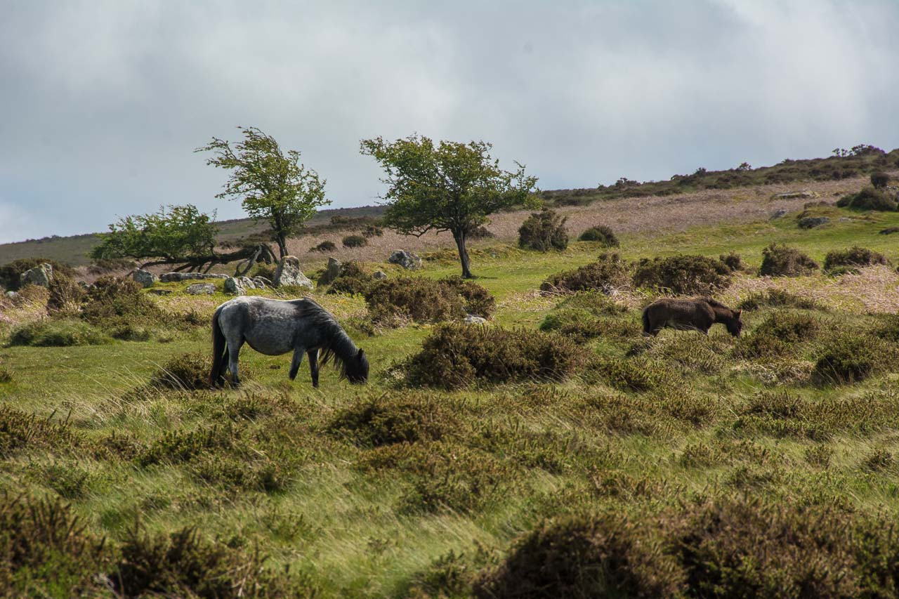 DartmoorNationalpark-23-4470