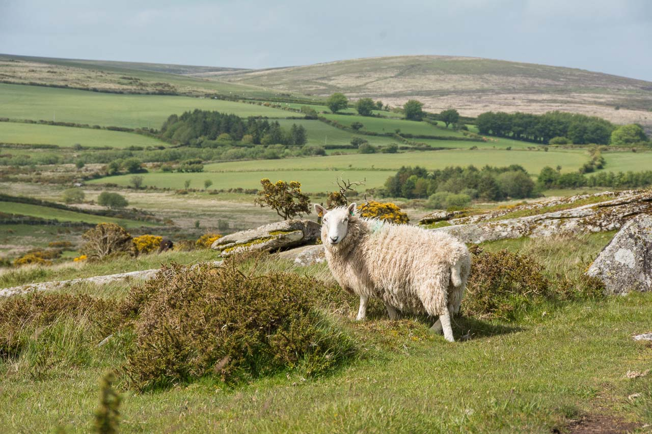 DartmoorNationalpark-35-4571