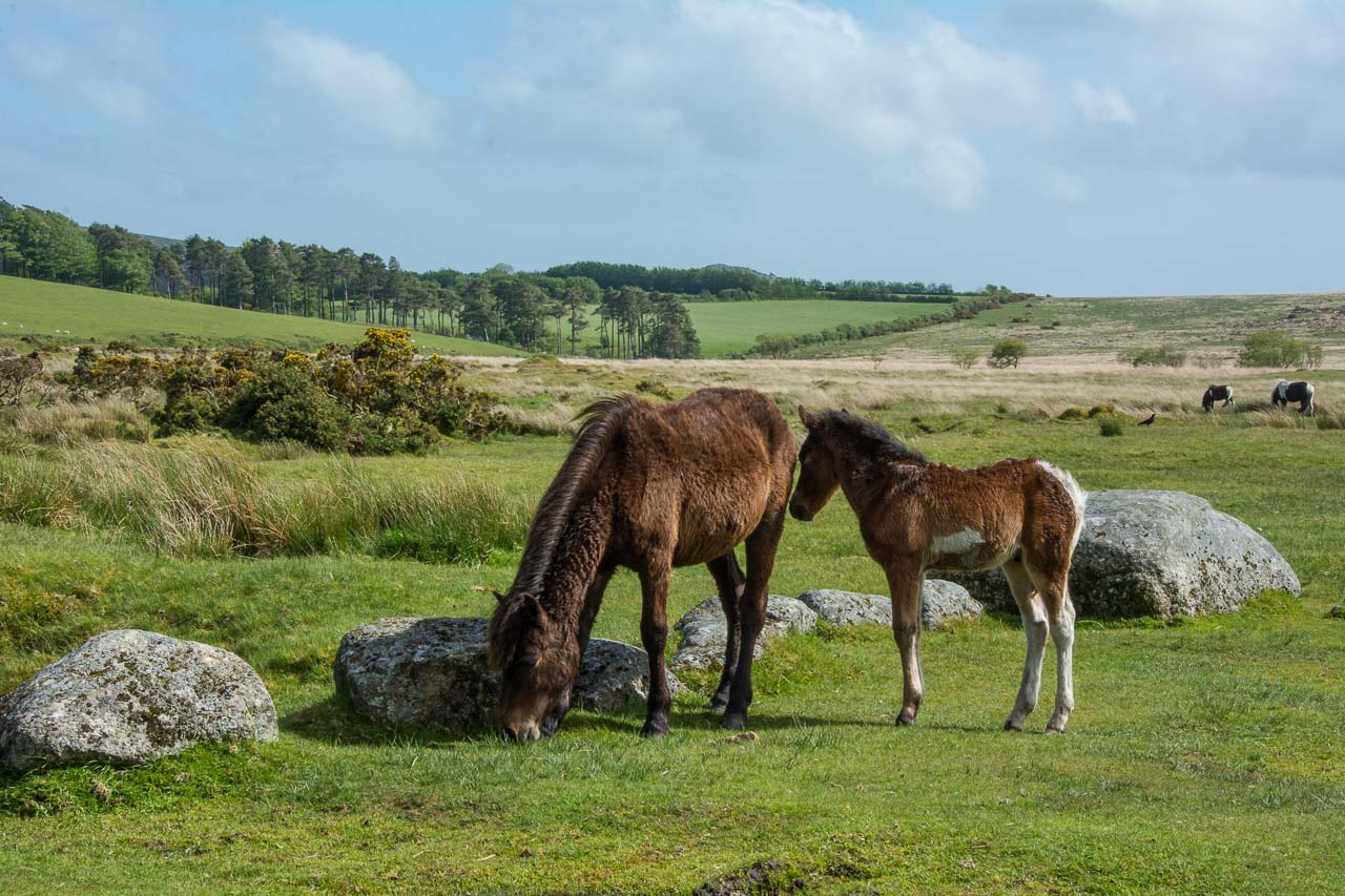 DartmoorNationalpark-36-4591