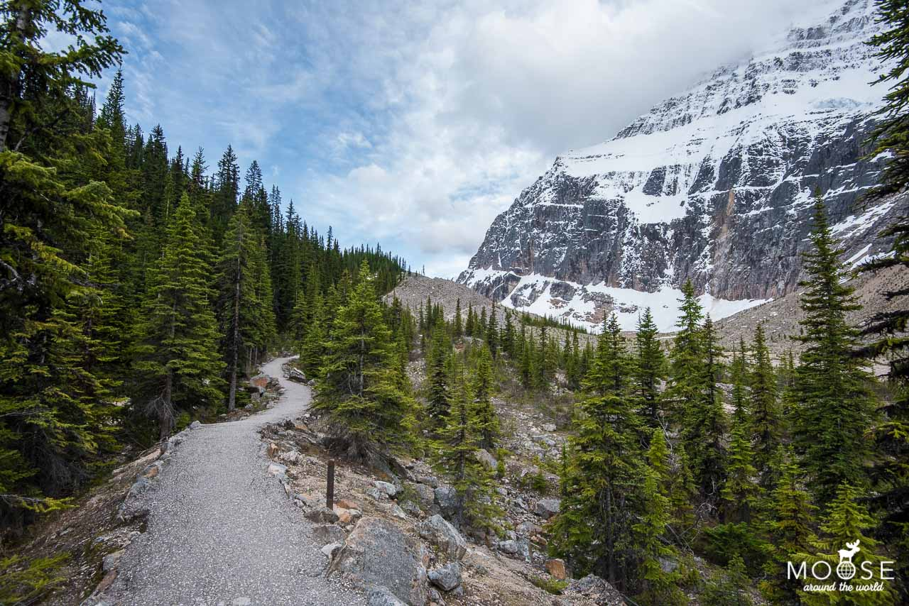 Path of the Glacier Trail Mount Edith Cavell