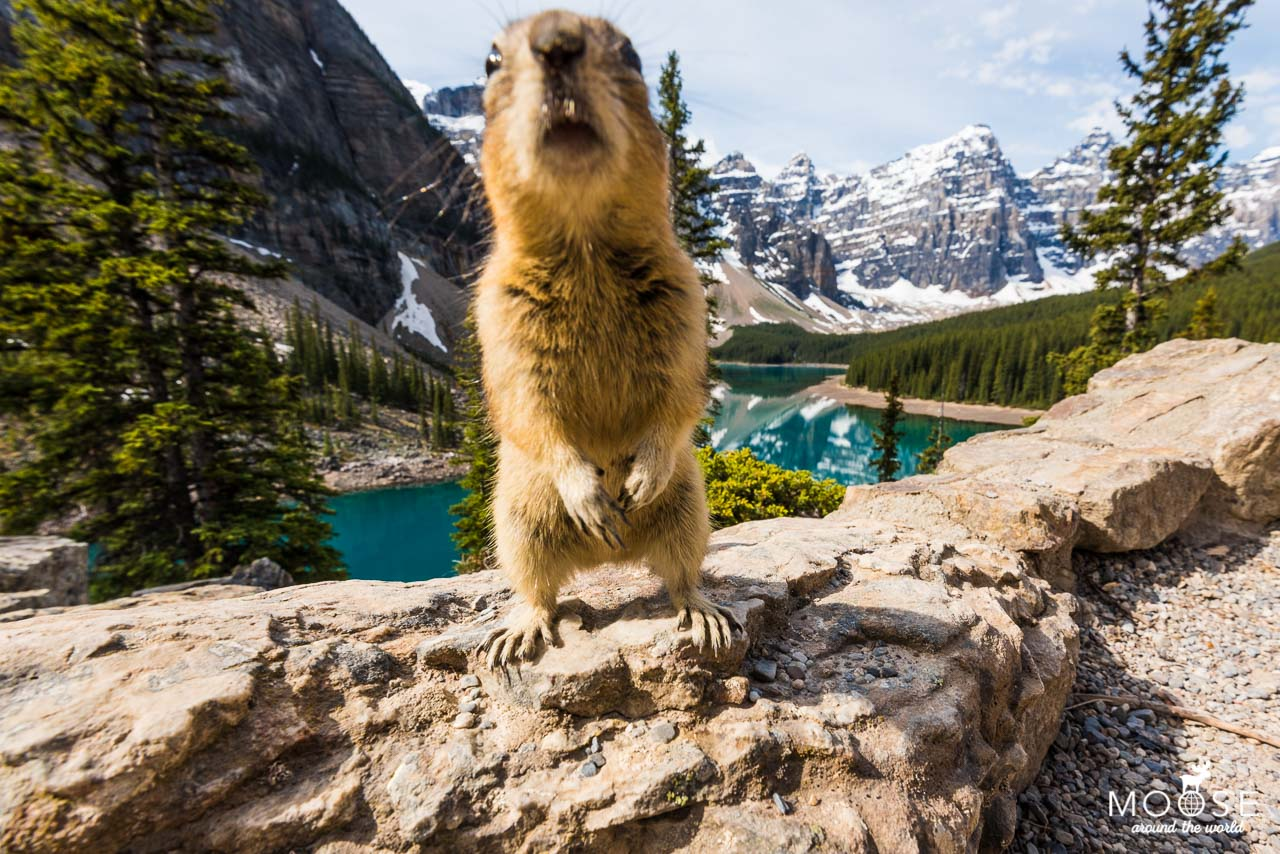 Moraine Lake Photobomb