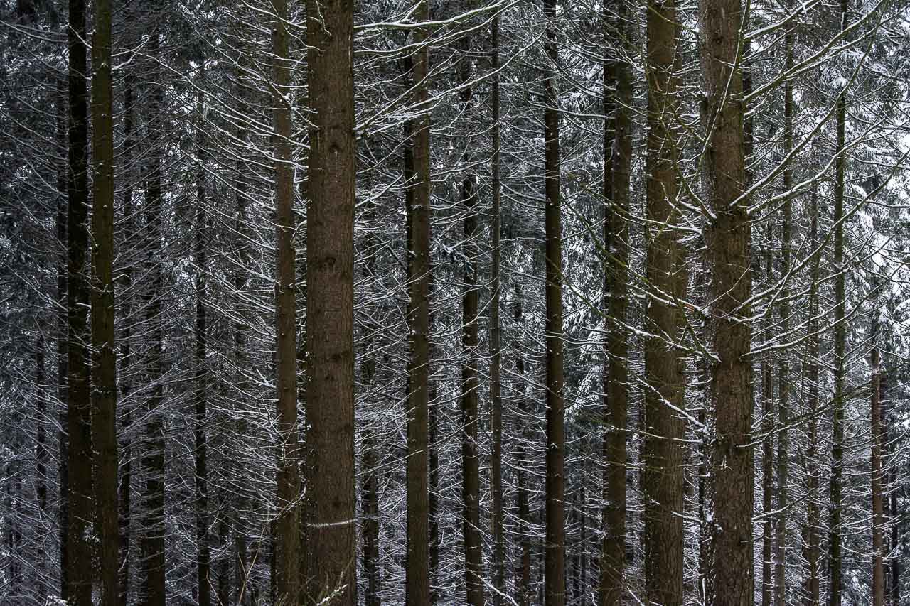 Traumpfade Wald Winter